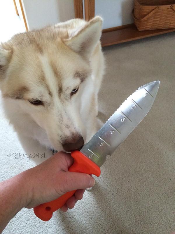 IMG_3955MagsGardenKnife