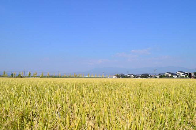 佐賀平野の秋