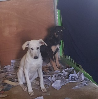 Rosie and Sonia – Rescued from Ansan Dog Farm