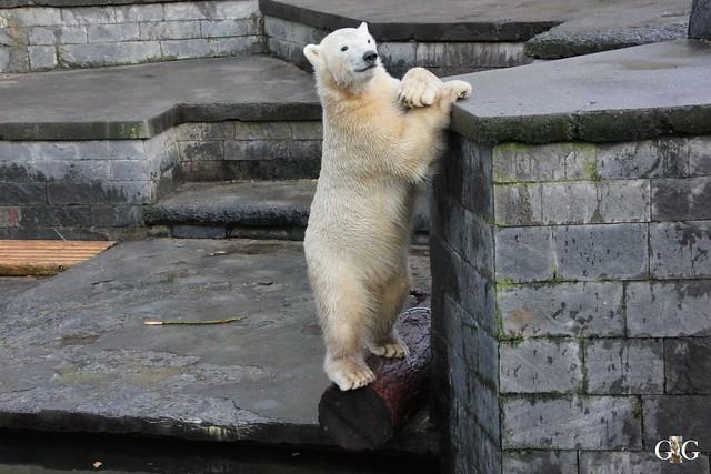 Besuch Zoo Rostock 12.12.201577