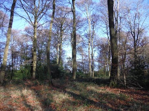 A wintry Great Widmoor Wood, near Wendover
