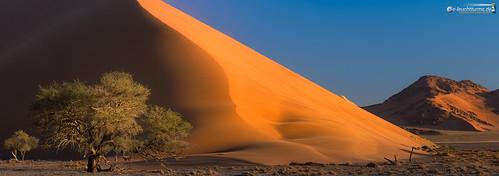 17x6 africa afrika dune40 dünen hardap kameldorn namibnaukluftnationalpark namibia panorama sandwüste sonnenuntergang tsauchabvalley vachelliaerioloba wüste desert sanddesert sunset hardapregion