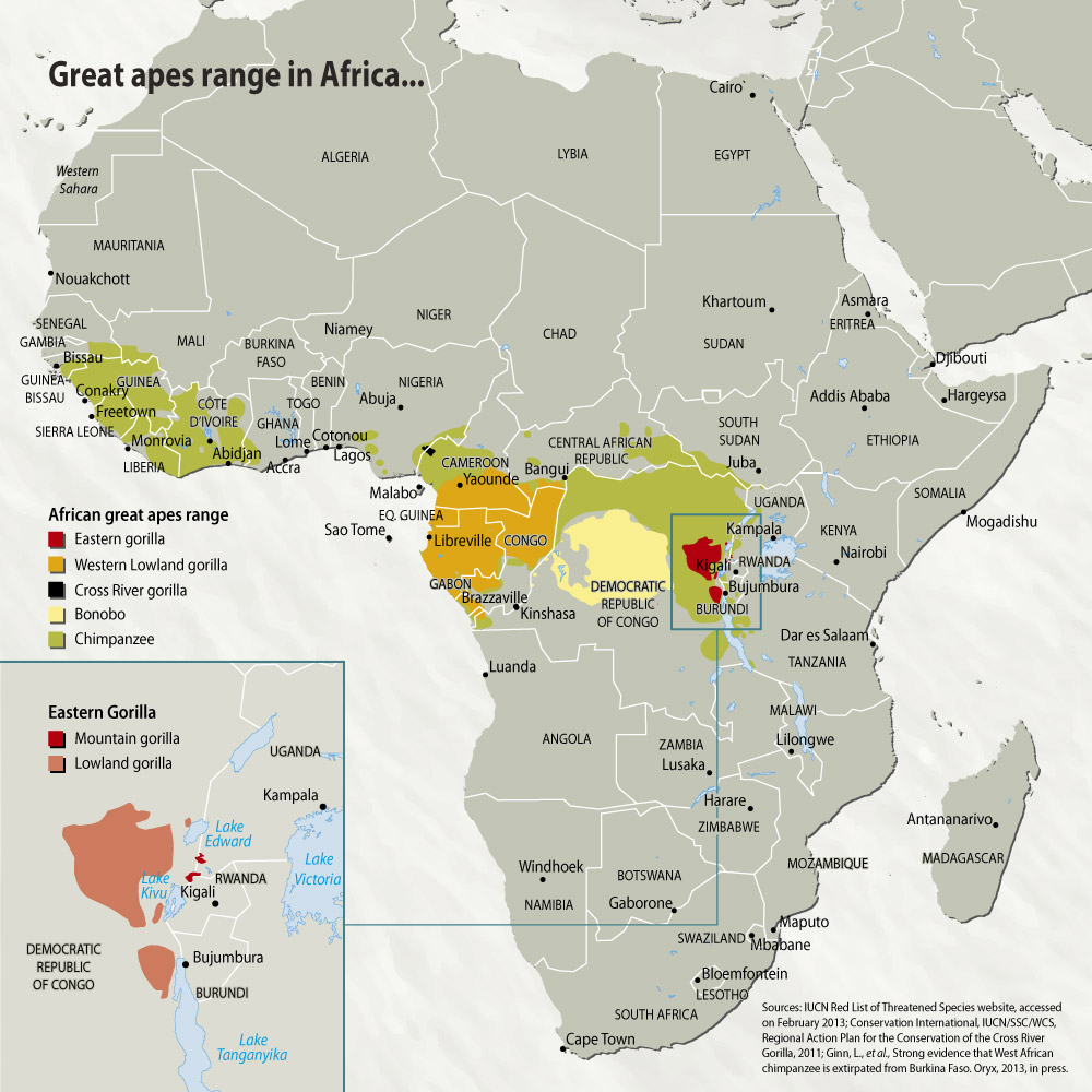 Great apes range in Africa | GRID Arendal