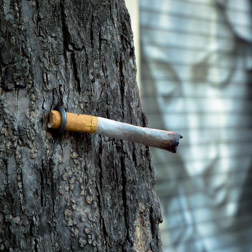 león españa tabaco propósito fumar tobaco purpose smoking tabac finalité fumer grafitti spain espagne