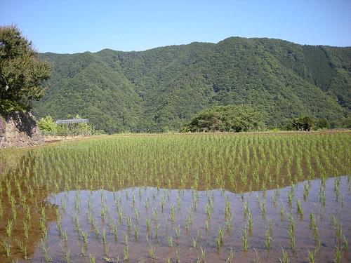 20080613-083941-tanazawa-inugoe