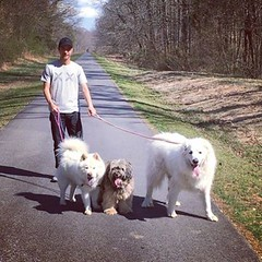 Walking the dogs together for the first time with @dworles #mischieftv #chowchow #greatpyrenees #indianheadrailtrail