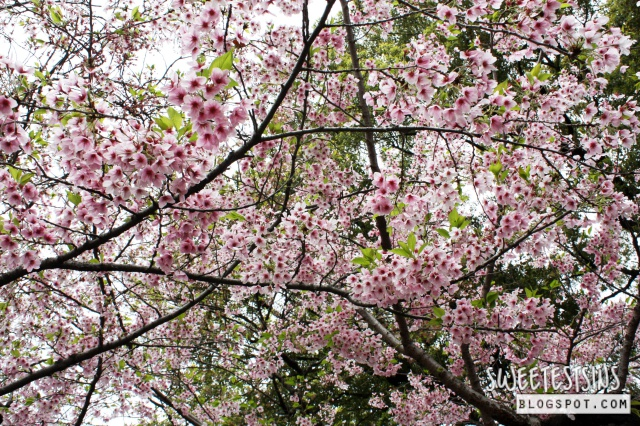 japan tokyo trip ueno park 22