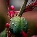 Red Hesperaloe by julesnene