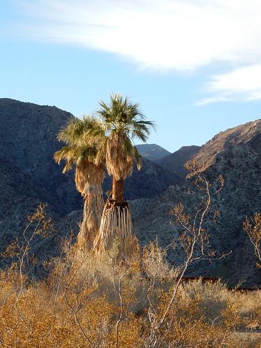 Borrego Palm Canyon Campground - 1