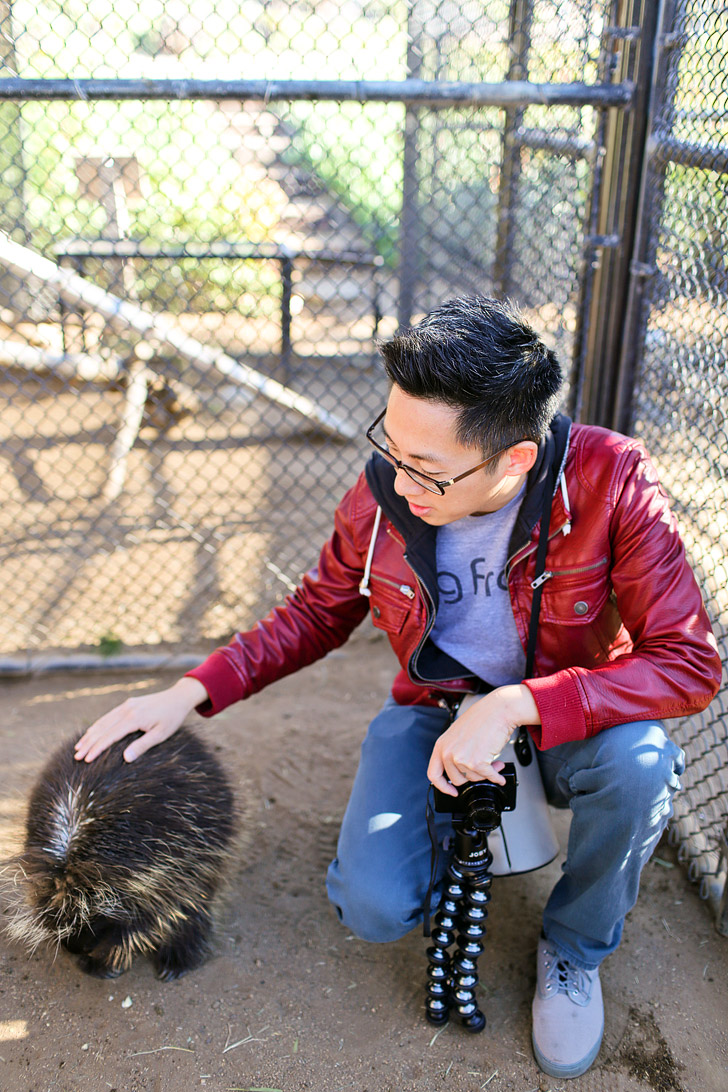 Meet and interact with the North American Porcupine (Erethizon dorsatum) at Wild Wonders Bonsall California. In the wild, they are found in the forests of Canada and the United States.