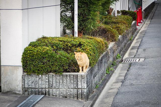 Today's Cat@2015-12-04