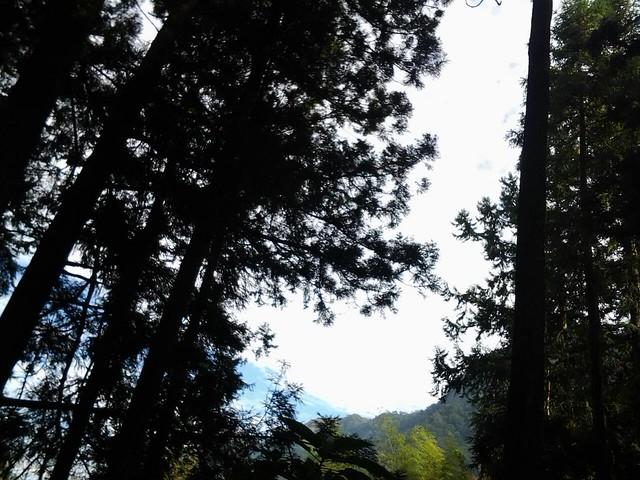 24525早晨陽光普照,下午霧茫茫。