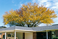 Fall Colors over House, North Richland Hills