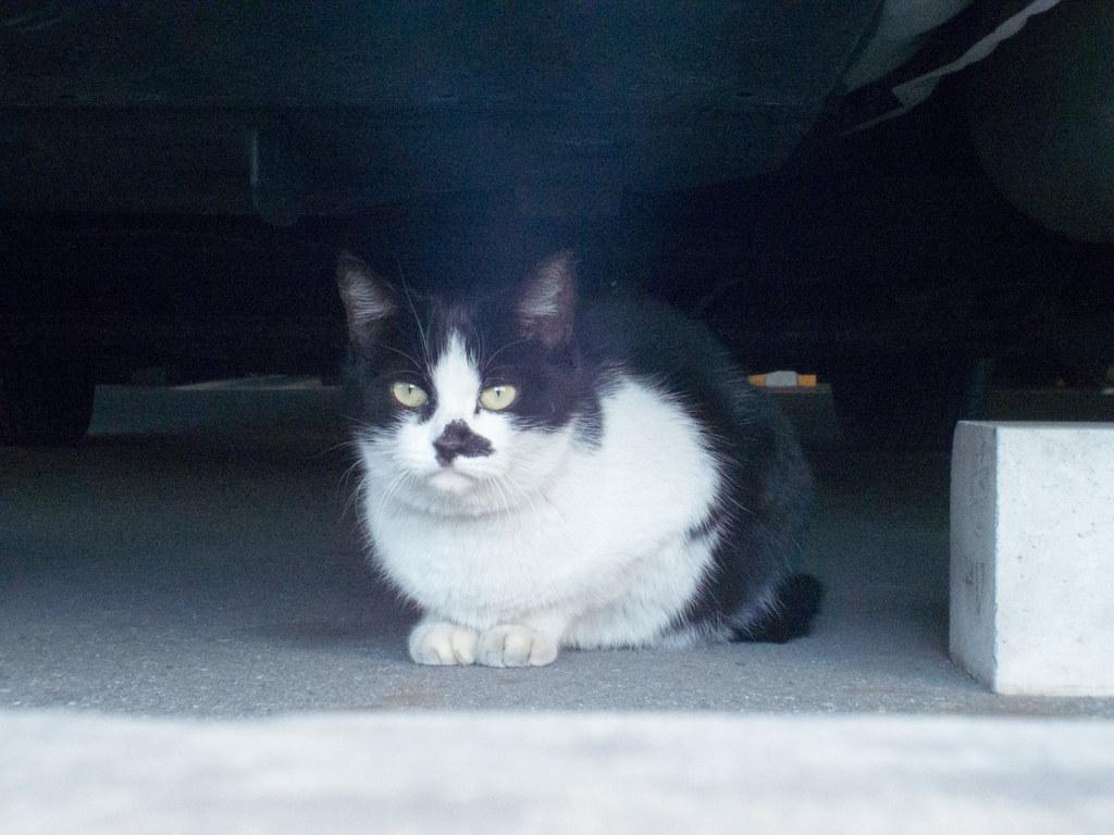 Stray cat f/8