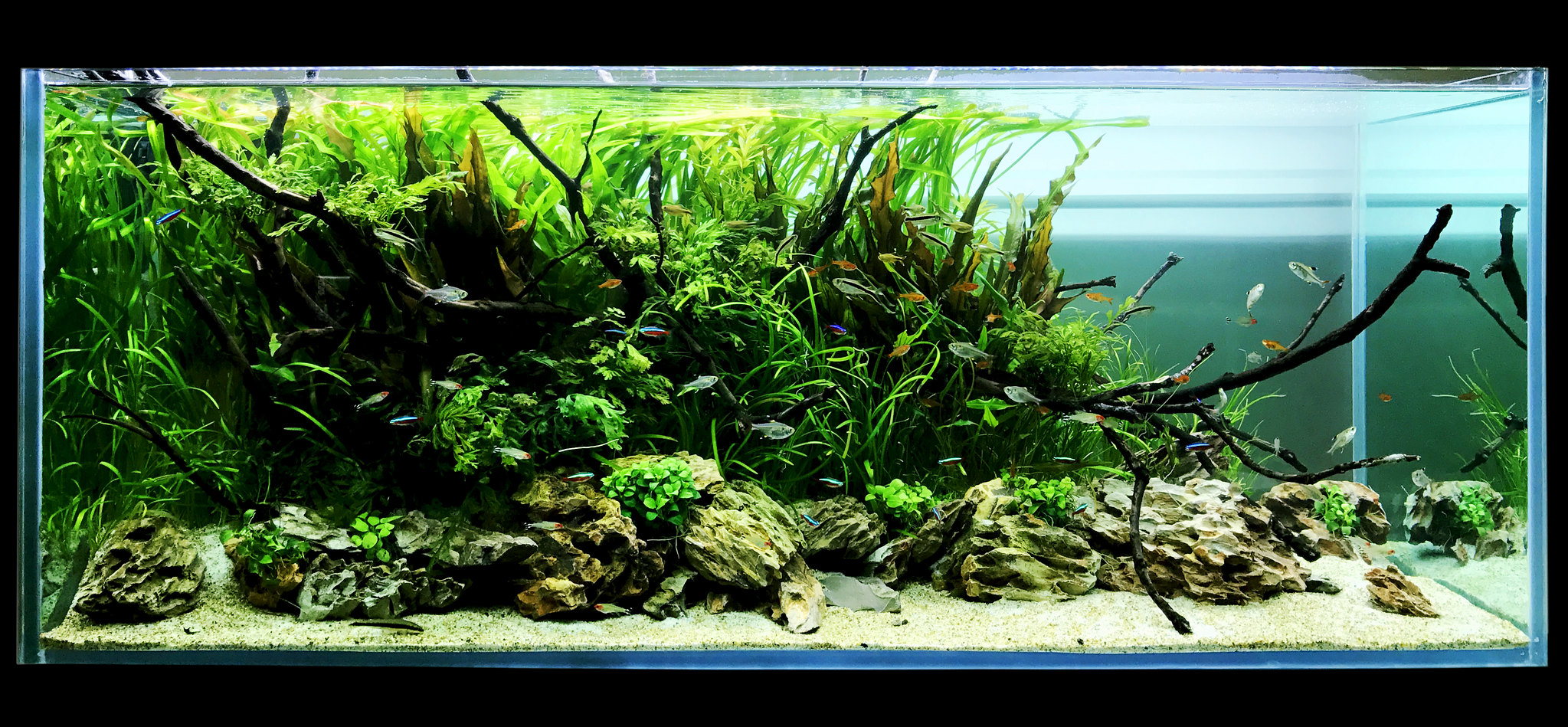 ... To Change The Tank And Make A New Aquascape. I Keept All My Plants But  Grew The Tank To A 120p 120x45x45cm. This Was The Result On Day 4 After  Planting.