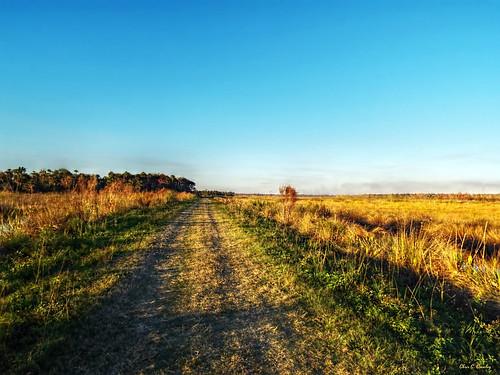 notasoulinsight lakewoodruffnationalwildliferefuge lwnwr deleonspringsflorida wetlands scenic landscape nature