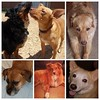 Happy National Dog Day! Top row: Copper, The Moose & Daisy; Bottom row: Hester, Phoebe, and Tishomingo