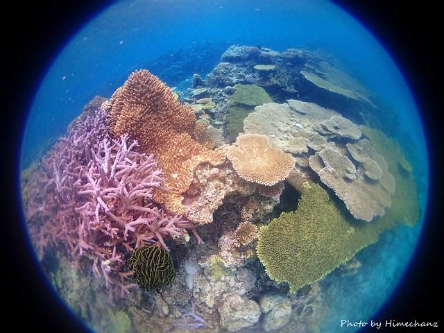 サンゴモリモリゾーン♪♪