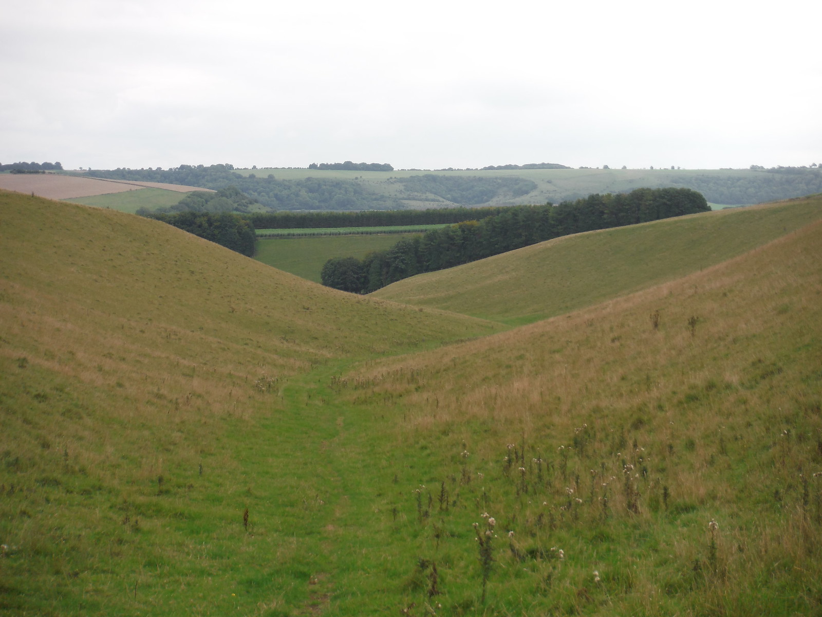 Backview down Church Bottom, Prescombe Down NNR (II) SWC Walk 250 Tisbury Circular via Alvediston