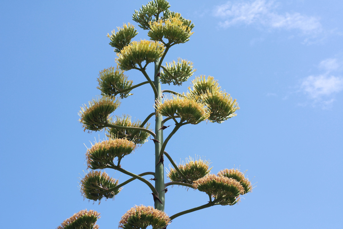 arbre-fleur