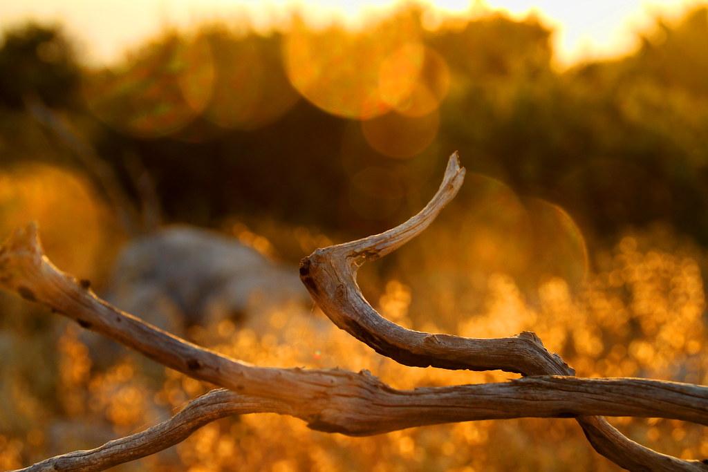 Golden glowing dead wood