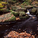 Autumn colour at Padley Gorge by ronet
