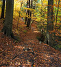 Enchanted woodland forest in autumn