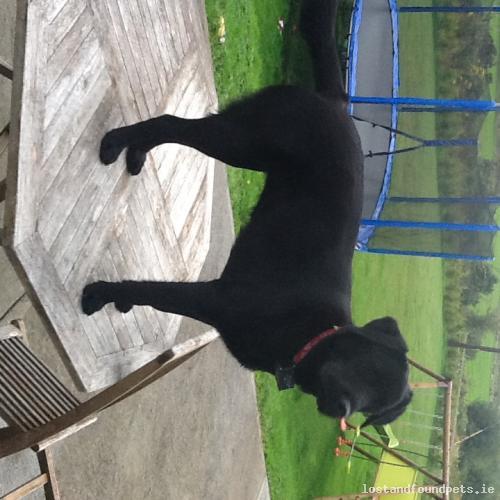 [Updated] Sun, Oct 25th, 2015 Lost Female Dog - Found!!!!, Found!!!!, Galway