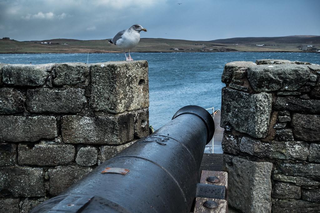 Shetland-46