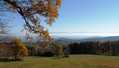 alps leaves linz landscape austria view gis laub herbst ob alpen aussicht landschaft blätter baum lichtenberg pöstlingberg mühlviertel farbenspiel alpenvorland herbstlichter erösterreich