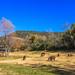 State Park Javelina