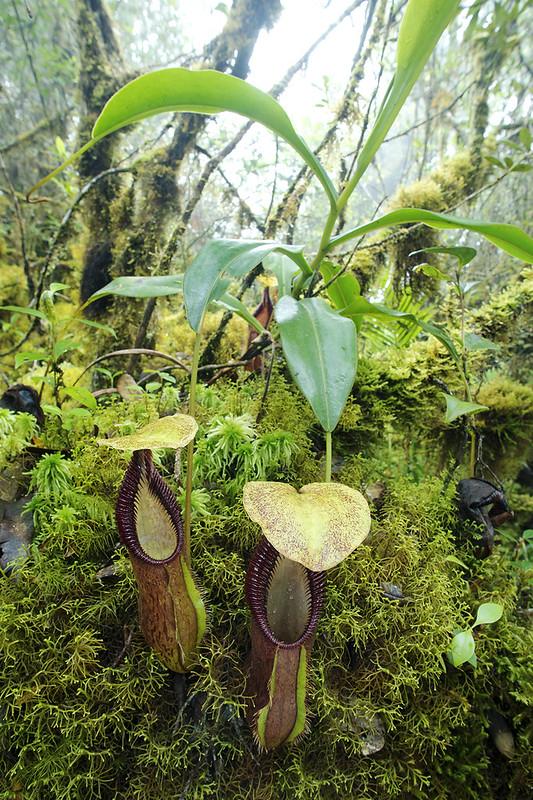Carnivores et orchidées in situ  22875409167_cb746a5637_c