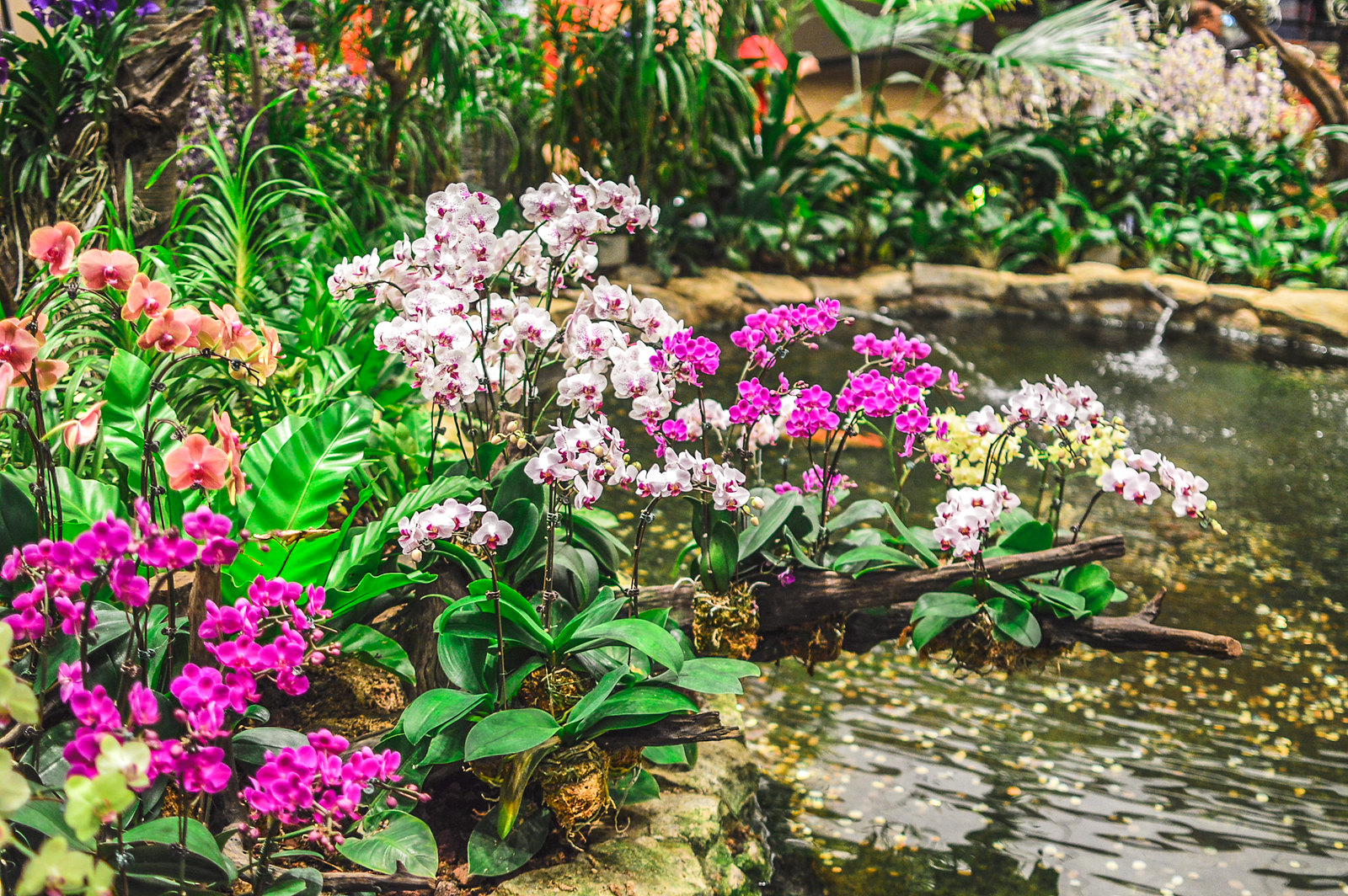 Charmant Singapore Changi Airport Orchid Garden ...