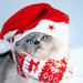 Merry Christmas by Leo a Mia