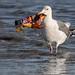 Stop Trashing My Ocean ... by Ingrid Taylar