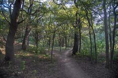 Trail - O.P. Schnabel Park - San Antonio - Texas - 18 September 2017