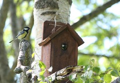 animal, branch, birdhouse, fauna, bird,