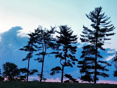 trees sunset summer sky night clouds virginia shenandoahvalley naturescene calendarshots theworldthroughmyeyes blandyfarm easternnorthamericanature markschurig