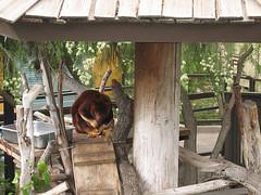 zoo, wood, tree house,
