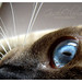 :: those penetrating eyes :: by gizi