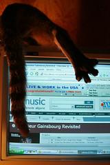 all music com