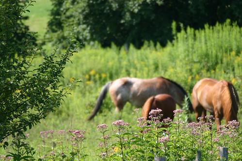 horses farm nh enfield