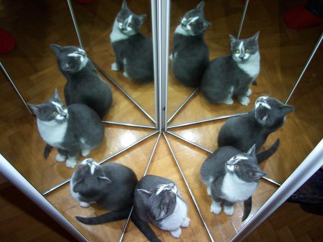 un cat and nine lives