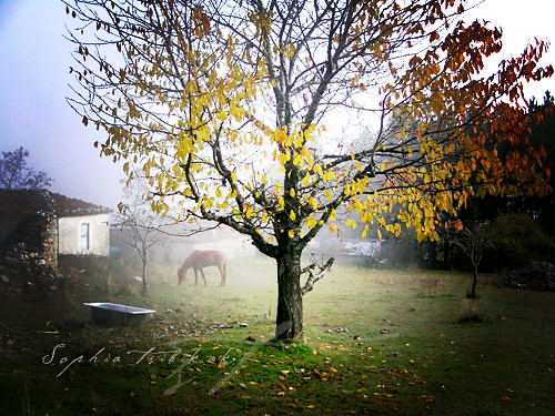 life trees color fall nature photoshop landscape photography topv333 dream atmosphere greece dreamy agiosathanasios sophiatsibikaki onjourneys littlegardenearth