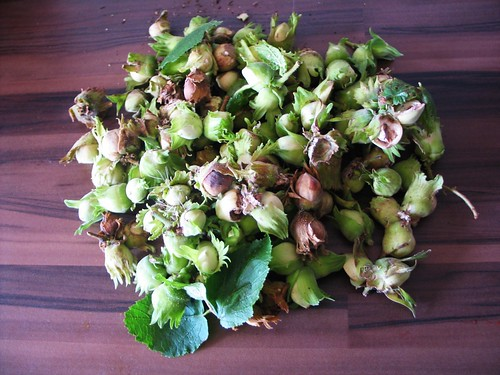 Foraged hazelnuts