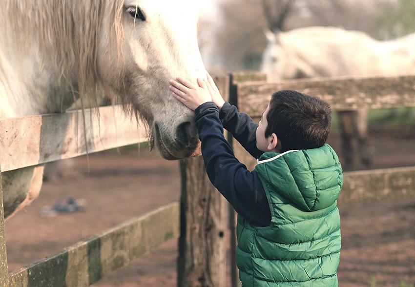 Domador de caballos - LP semana 13