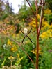 Orb Weaver (dorsal view) by deanspic