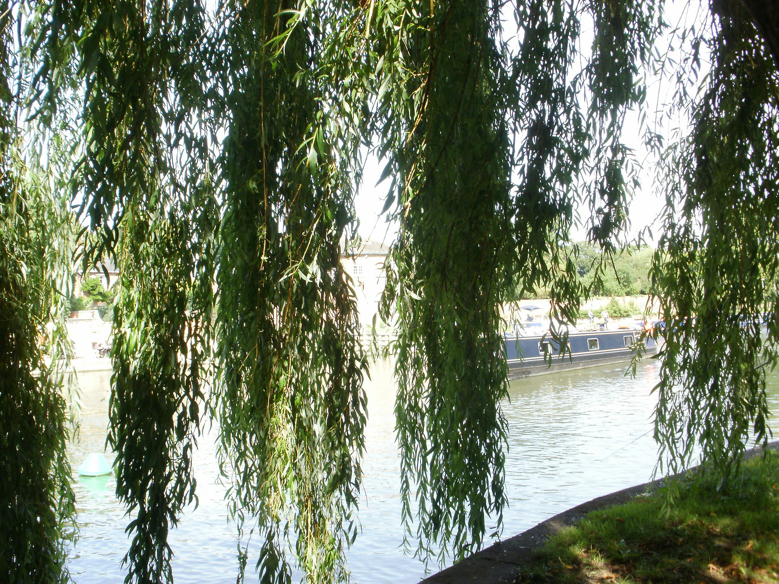 Willows and barge