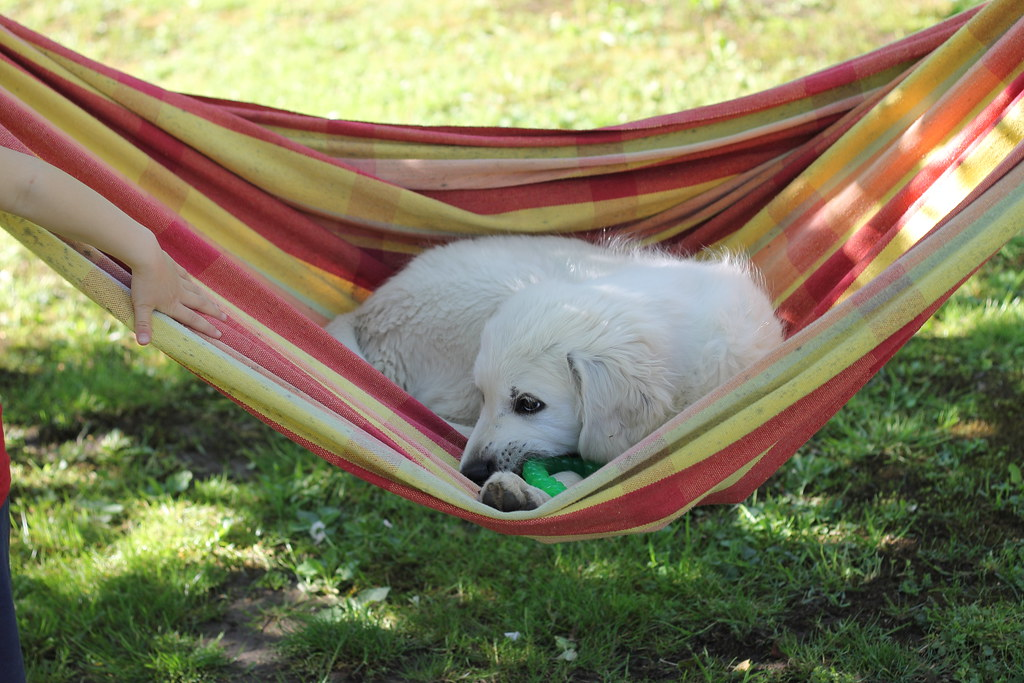 Hammock puppy