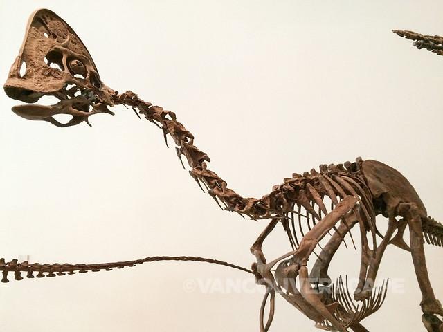 Oviraptorsaur